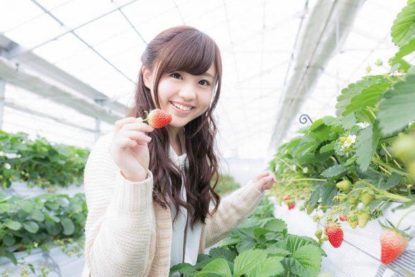 Du học Nhật Bản ngành nông nghiệp - Lựa chọn đúng đắn